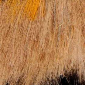 Fox dorado
